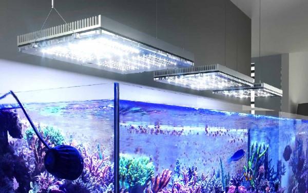 GNC Blu-Ray LED-Leuchte