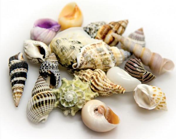 Hobby Sea Shells Set S (Schneckenhäuser 20 St.)