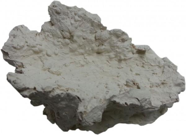 Muschelstein aus Riffkeramik