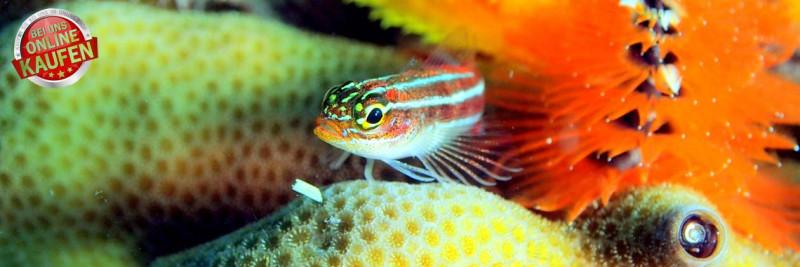 Kategorie Meersalz für Aquarien