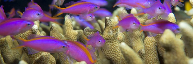 Kategorie Futter für Meerwasser Bewohner