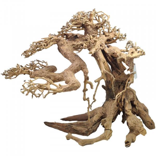 Aquarium Bonsai Baum 35 x 30 cm A1