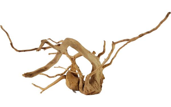 Rote Moorwurzel   Fingerwood 72 x 38 cm # B4OONU99GC
