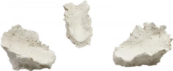 Korallenwelt Muschelsteine / Muschelhalter 1 Stück