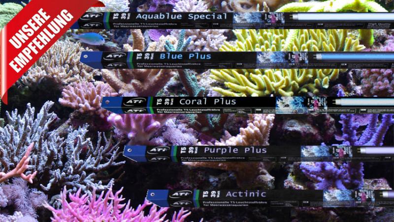 T5 Leuchtstoffröhren für die Meerwasseraquaristik